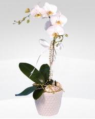 1 dallı orkide saksı çiçeği  Bolu online çiçekçi , çiçek siparişi