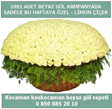 1001 adet beyaz gül sepeti özel kampanyada  Bolu çiçek gönderme sitemiz güvenlidir