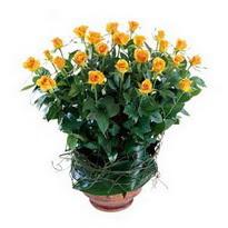 Bolu cicekciler , cicek siparisi  10 adet sari gül tanzim cam yada mika vazoda çiçek