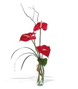 Bolu çiçek siparişi sitesi  cam yada mika Vazoda 3 adet  antoryum