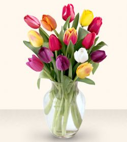 Bolu çiçekçiler  13 adet cam yada mika vazoda laleler