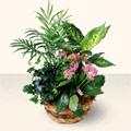Bolu çiçek satışı  5 adet canli çiçek sepette