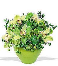 cam yada mika vazoda 5 adet orkide   Bolu online çiçekçi , çiçek siparişi