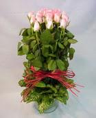13 adet pembe gül silindirde   Bolu çiçek yolla