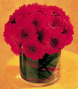 Bolu ucuz çiçek gönder  23 adet gerbera çiçegi sade ve sik cam içerisinde