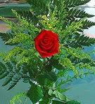 1 adet kirmizi gül buketi   Bolu çiçek siparişi vermek