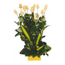 12 adet beyaz gül aranjmani  Bolu kaliteli taze ve ucuz çiçekler
