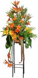Bolu çiçek siparişi sitesi  perförje tanzimi dügün nikah ve açilislara