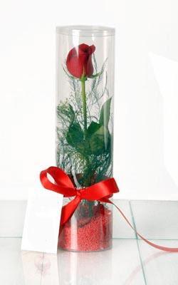 Bolu çiçek yolla  Silindir vazoda tek kirmizi gül