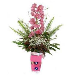 Bolu hediye çiçek yolla  cam yada mika vazo içerisinde tek dal orkide çiçegi