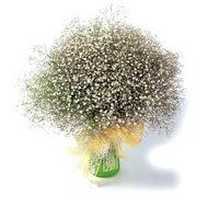 Bolu çiçek mağazası , çiçekçi adresleri  cam yada mika vazo içerisinde cipsofilya demeti