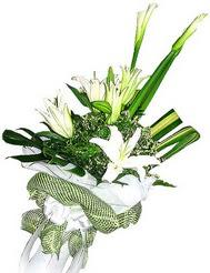 Bolu güvenli kaliteli hızlı çiçek  3 dal kazablanka çiçegi ve yesillikler