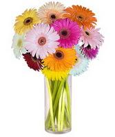 Bolu internetten çiçek siparişi  Farkli renklerde 15 adet gerbera çiçegi