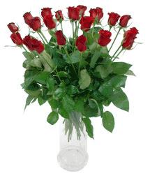 Bolu çiçekçi telefonları  11 adet kimizi gülün ihtisami cam yada mika vazo modeli