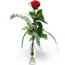 Bolu 14 şubat sevgililer günü çiçek  Sana deger veriyorum bir adet gül cam yada mika vazoda