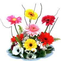 Bolu hediye çiçek yolla  camda gerbera ve mis kokulu kir çiçekleri