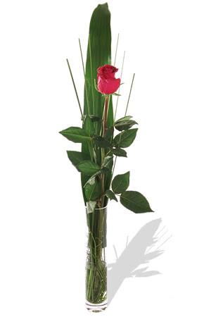 1 adet cam vazo içerisinde kirmizi gül  Bolu çiçek , çiçekçi , çiçekçilik