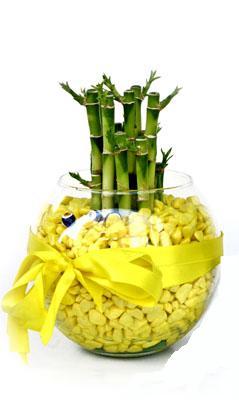 cam fanus içerisinde bambo  Bolu internetten çiçek satışı