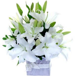 Bolu çiçek yolla  2 dal cazablanca vazo çiçeği