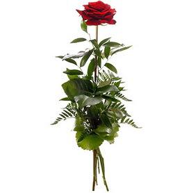 Bolu online çiçekçi , çiçek siparişi  1 adet kırmızı gülden buket