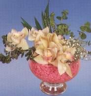 Bolu çiçek mağazası , çiçekçi adresleri  Dal orkide kalite bir hediye