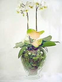Bolu çiçek satışı  Cam yada mika vazoda özel orkideler