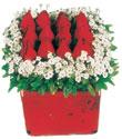 Bolu çiçek gönderme  Kare cam yada mika içinde kirmizi güller - anneler günü seçimi özel çiçek