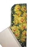 Bolu çiçek gönderme  Kutu içerisine dal cymbidium orkide