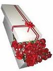 Bolu çiçekçi telefonları  11 adet 1.kalite magnum güller