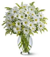 Vazo içerisinde beyaz krizantem çiçekleri  Bolu çiçekçi mağazası