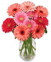 vazo içerisinde 13 adet gerbera çiçeği  Bolu çiçek siparişi sitesi