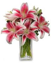Vazo içerisinde 5 dal kazablanka çiçeği  Bolu cicekciler , cicek siparisi