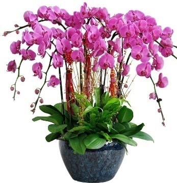9 dallı mor orkide  Bolu 14 şubat sevgililer günü çiçek