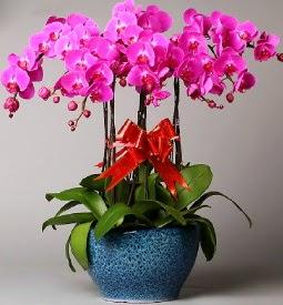 7 dallı mor orkide  Bolu çiçek online çiçek siparişi