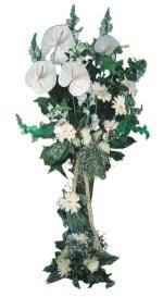 Bolu çiçek mağazası , çiçekçi adresleri  antoryumlarin büyüsü özel