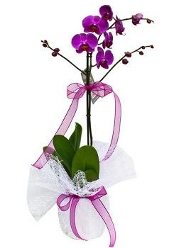 Tek dallı mor orkide  Bolu çiçekçi telefonları