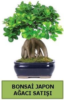 Bonsai japon ağacı satışı  Bolu çiçek satışı