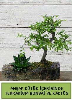 Ahşap kütük bonsai kaktüs teraryum  Bolu internetten çiçek siparişi