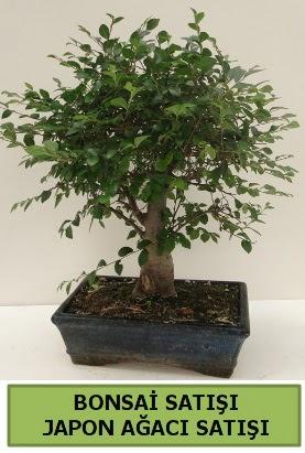 Minyatür bonsai japon ağacı satışı  Bolu çiçek gönderme sitemiz güvenlidir