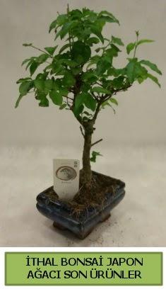 İthal bonsai japon ağacı bitkisi  Bolu hediye sevgilime hediye çiçek