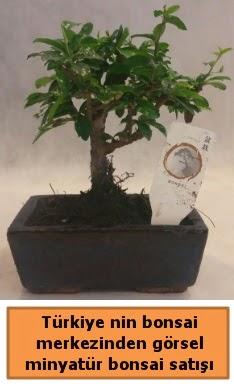 Japon ağacı bonsai satışı ithal görsel  Bolu çiçek yolla