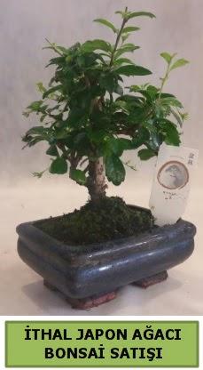 İthal japon ağacı bonsai bitkisi satışı  Bolu çiçekçi telefonları