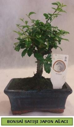 Minyatür bonsai ağacı satışı  Bolu çiçek gönderme