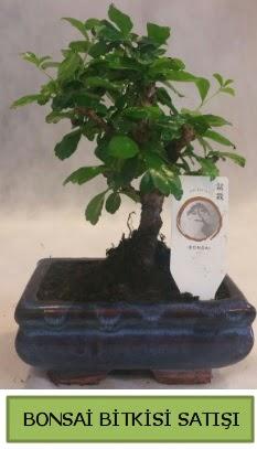 Bonsai ithal görsel minyatür japon ağacı  Bolu ucuz çiçek gönder