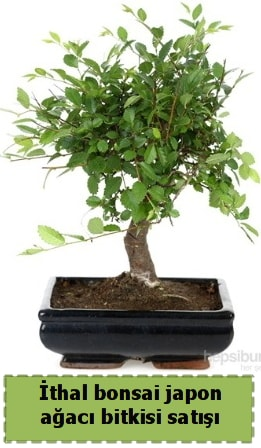 İthal bonsai saksı çiçeği Japon ağacı satışı  Bolu İnternetten çiçek siparişi