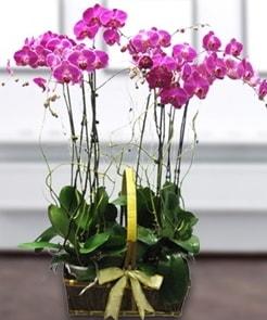 7 dallı mor lila orkide  Bolu çiçek gönderme sitemiz güvenlidir