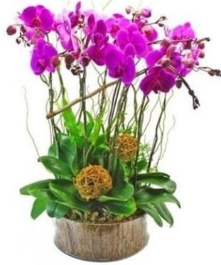 Ahşap kütükte lila mor orkide 8 li  Bolu internetten çiçek satışı
