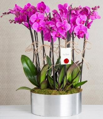 11 dallı mor orkide metal vazoda  Bolu çiçek gönderme sitemiz güvenlidir
