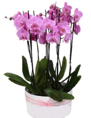 Beyaz seramik içerisinde 7 dallı mor orkide  Bolu çiçekçi telefonları