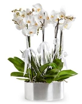 Beş dallı metal saksıda beyaz orkide  Bolu çiçek yolla